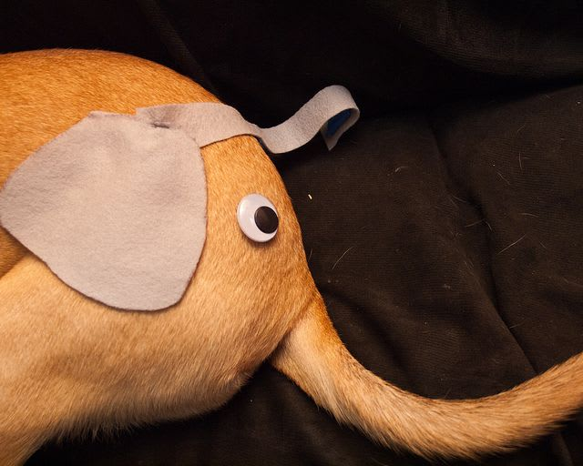 My dog's butt with some gray felt and a googly eye