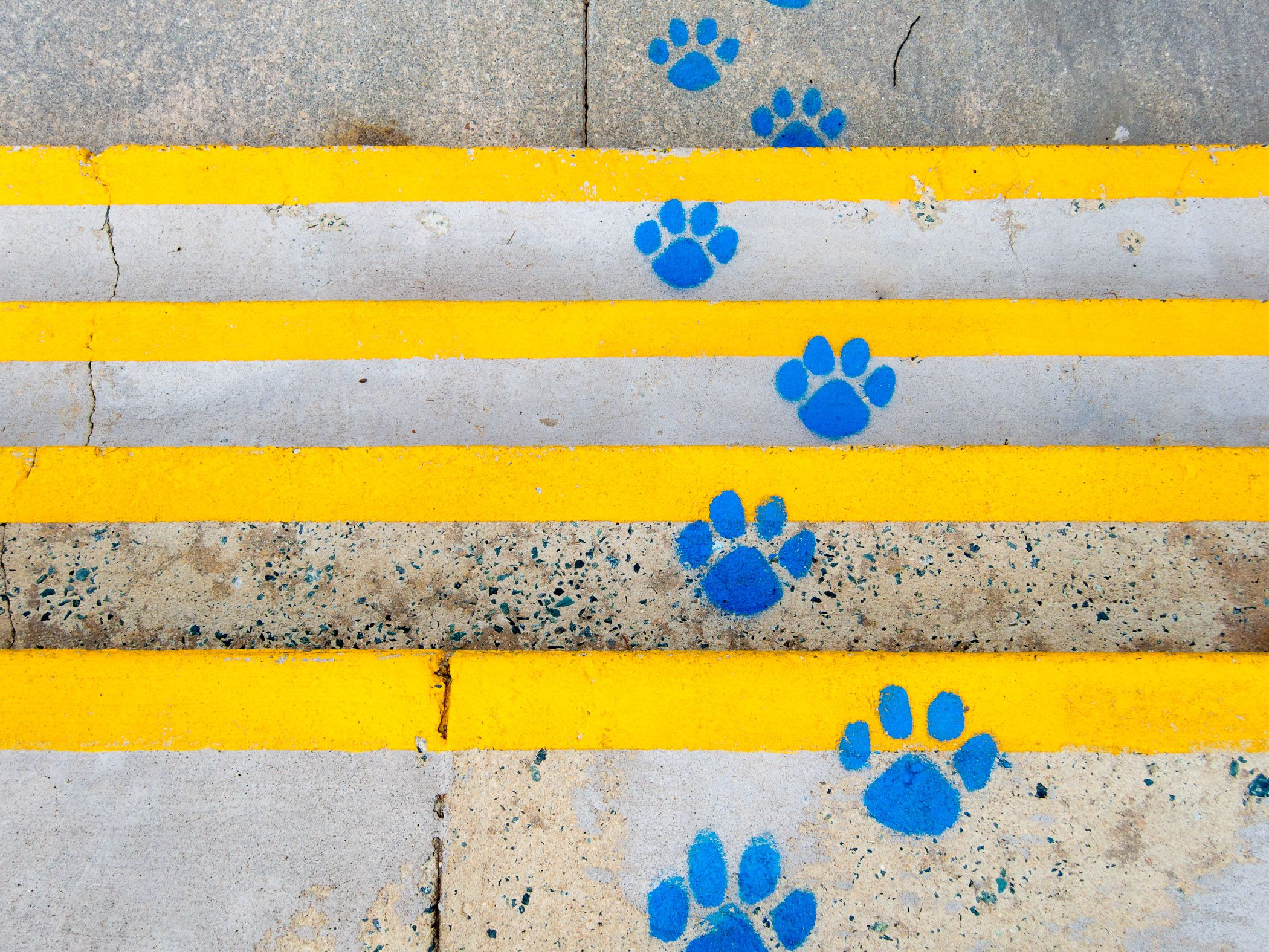 Yellow lines and blue pawprints