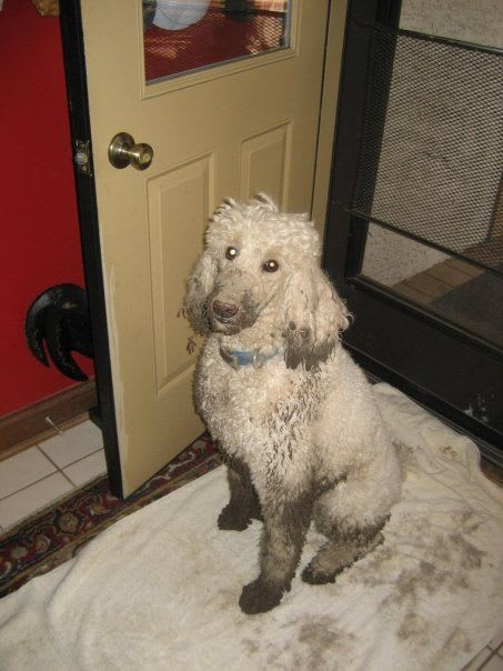 Murphy covered in mud