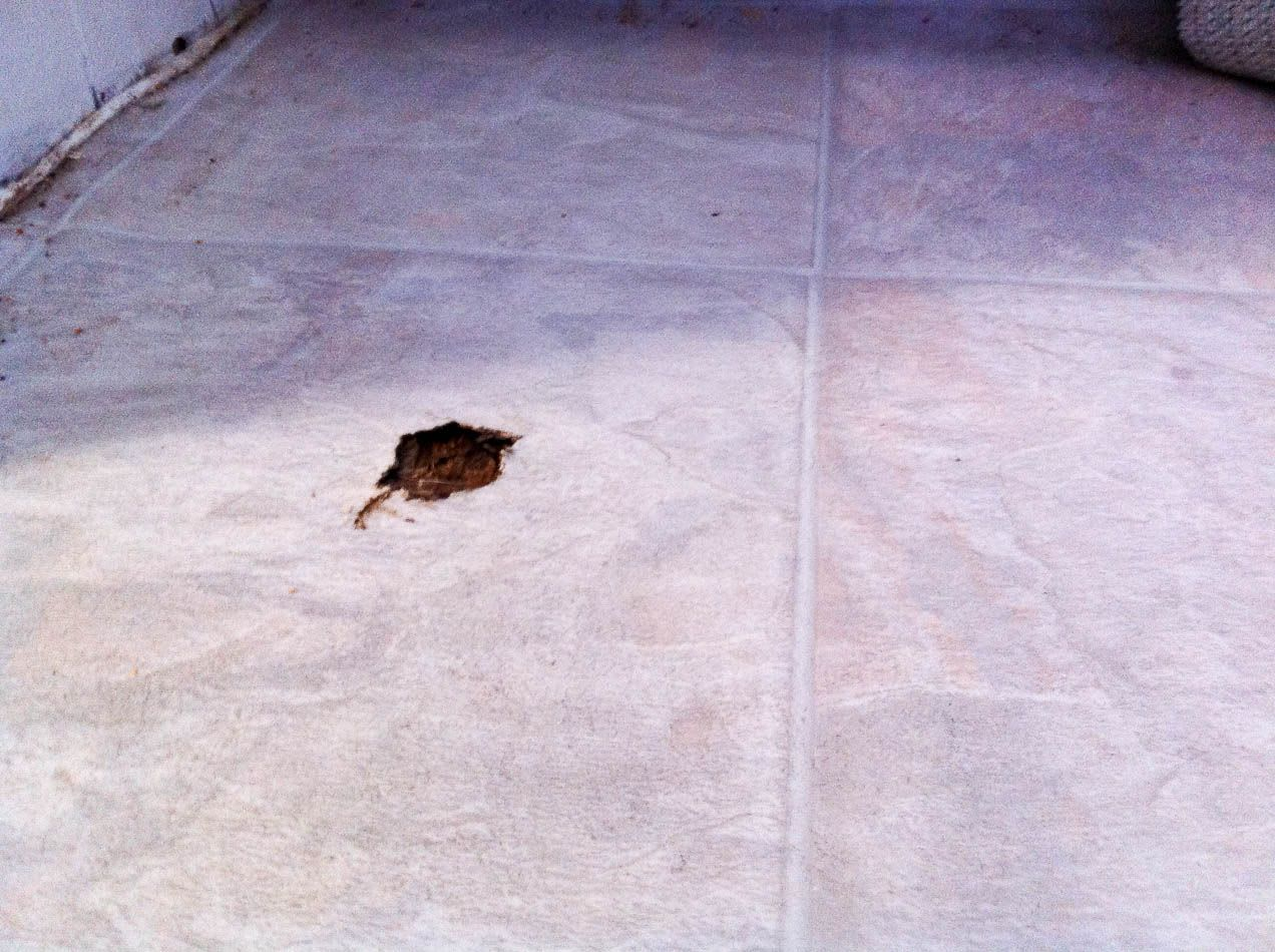 A hole in a tile floor, caused by a dog