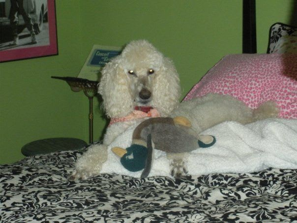 Murphy with a duck